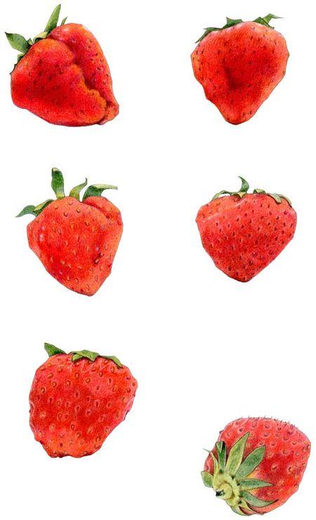 16 Strawberries
