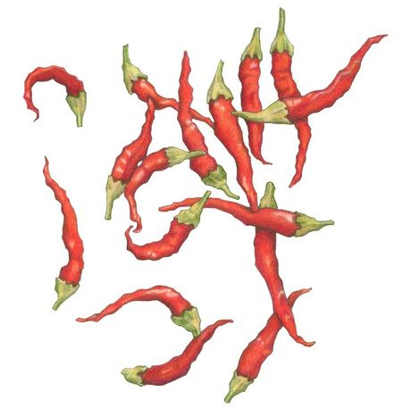 23RedHotChillies