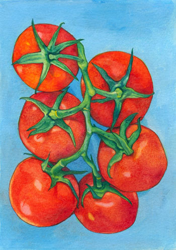 32TomatoesWCpencil