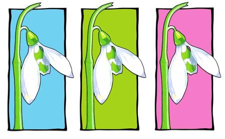 01-Snowdrop-blue-green-pink