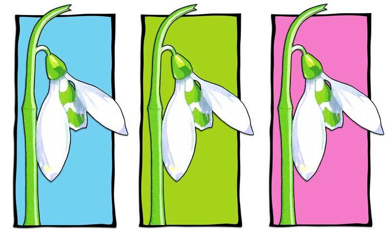 01-Snowdrop-blue-green-pink