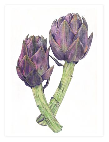 10 Purple Artichokes FINAL