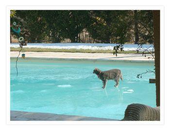 Toby on Ice 02