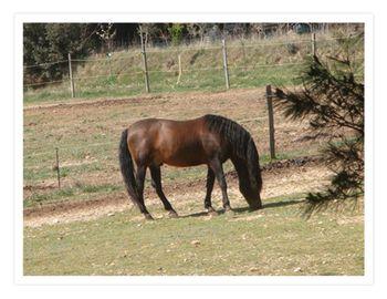 Friends horse