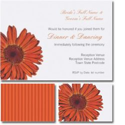 Gerbera-reception