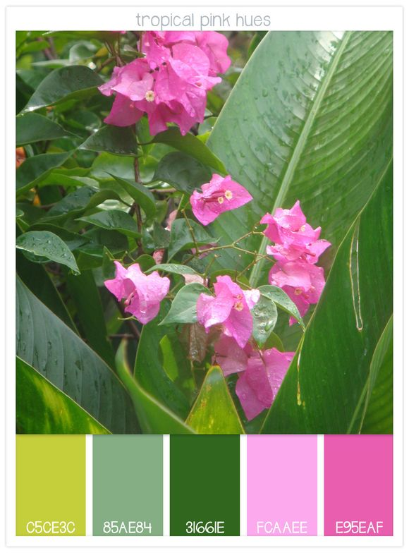 07-Tropical-Pink-Hues