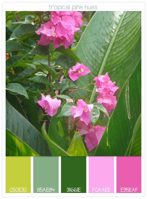 07-Tropical-Pink-Hues