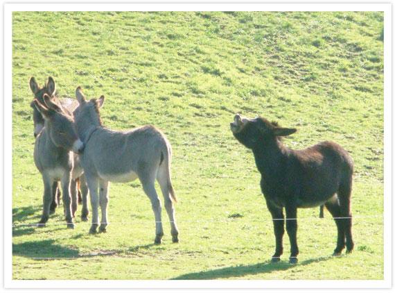 08-Donkeys-2