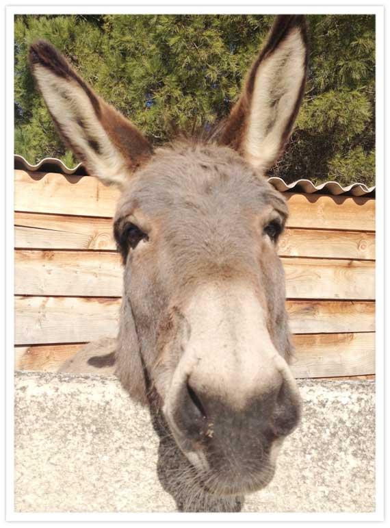 08-Donkeys-6