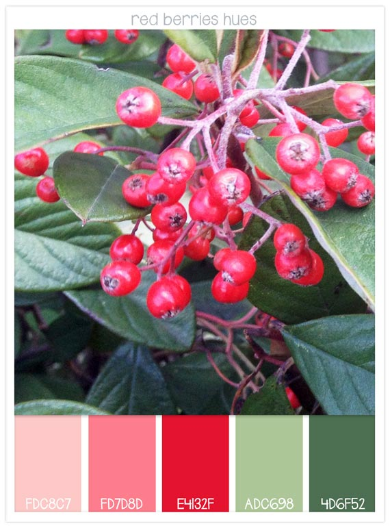 29-red-berries-hues