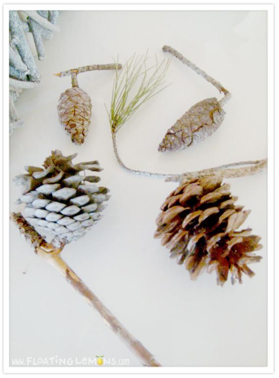 Pine-cone-photo-4