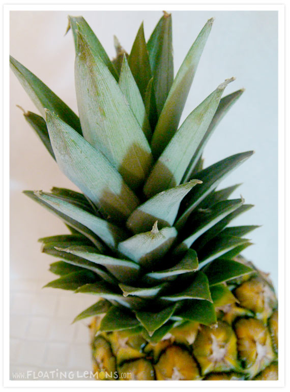 Pineapple-photo-4