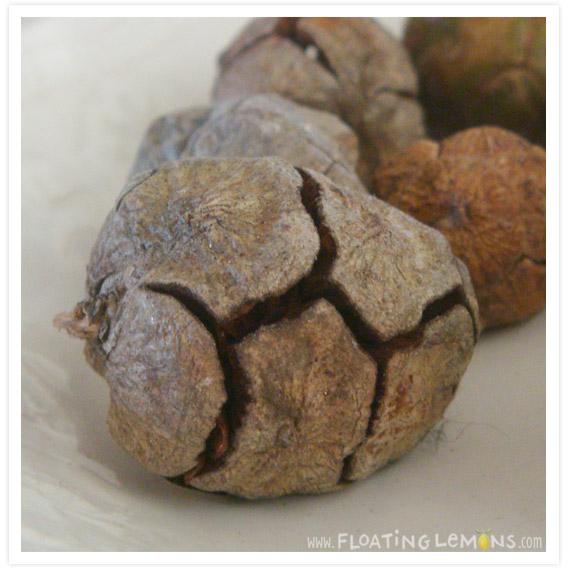 Round-pine-cones-4