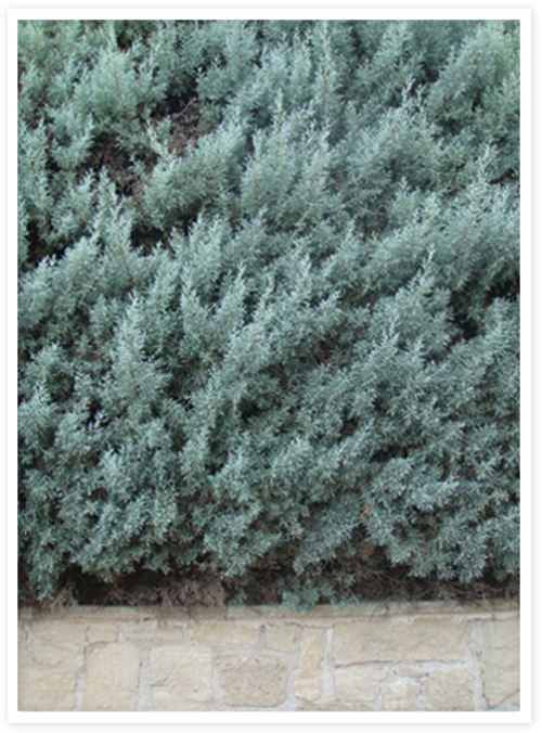 90-hedge