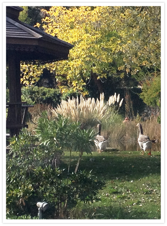 04-inspiration-geese-4