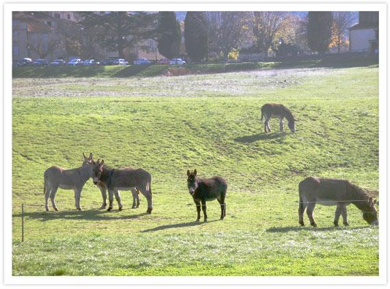 08-Donkeys-1