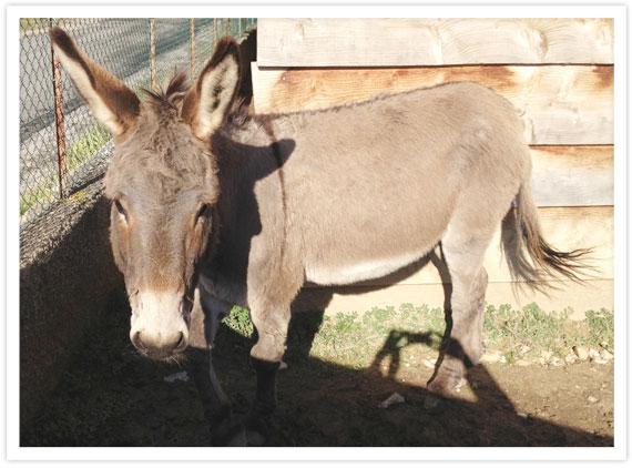 08-Donkeys-5