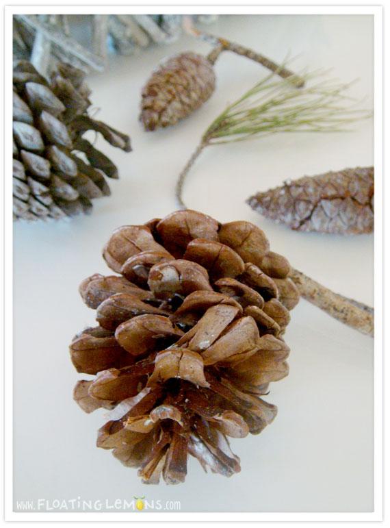 Pine-cone-photo-1