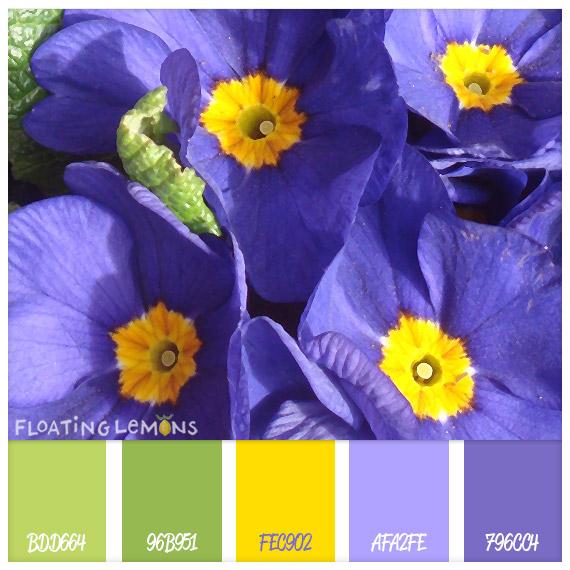 Purple-flower-hues