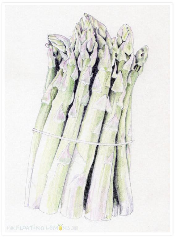 Asparagus-sketch