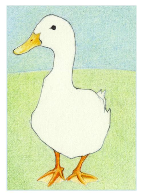82-Duck-drawn