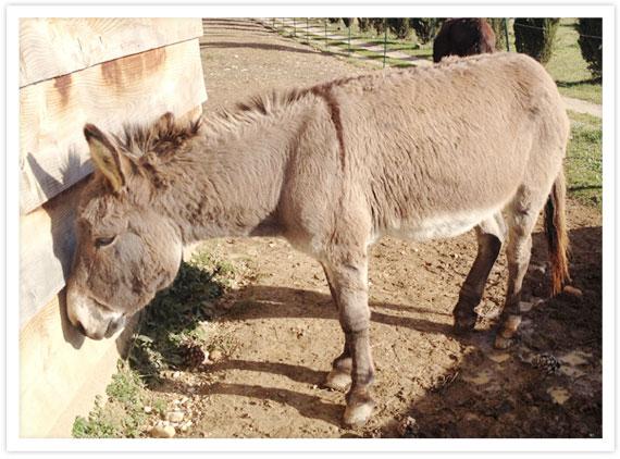08-Donkeys-4