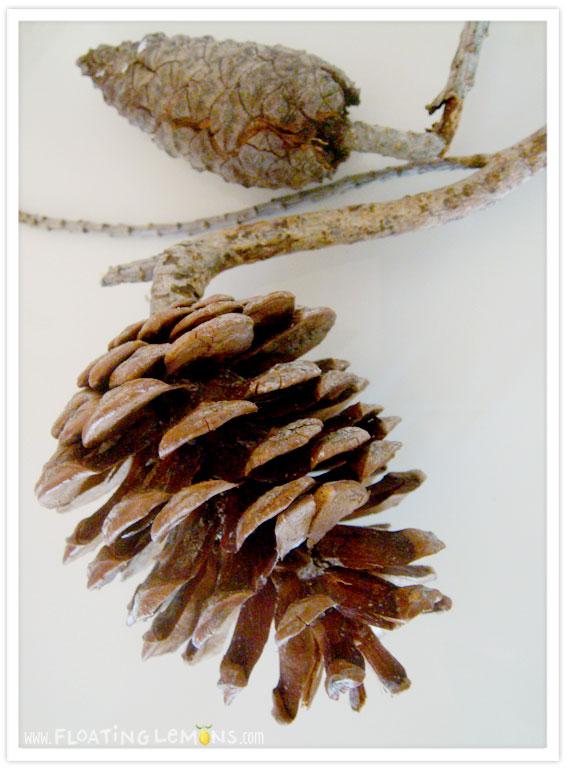 Pine-cone-photo-2