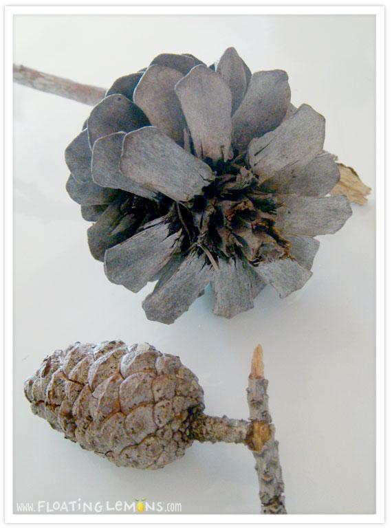 Pine-cone-photo-3
