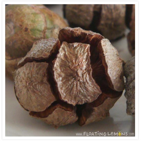 Round-pine-cones-3