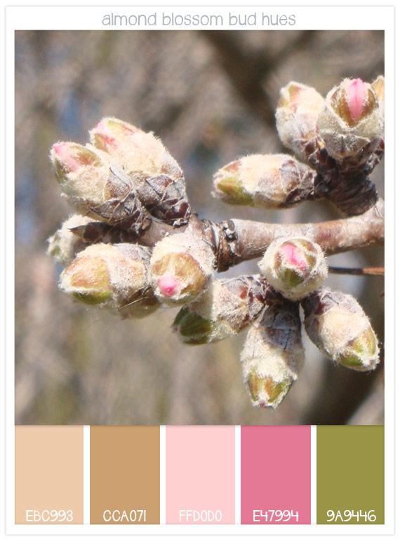 70 almond-blossom-bud-hues