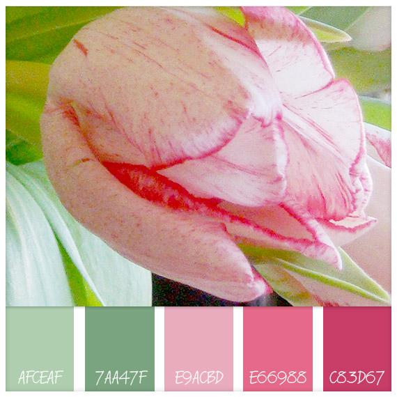 01-pink-tulip-hues