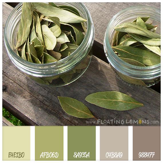 Bay-leaf-hues