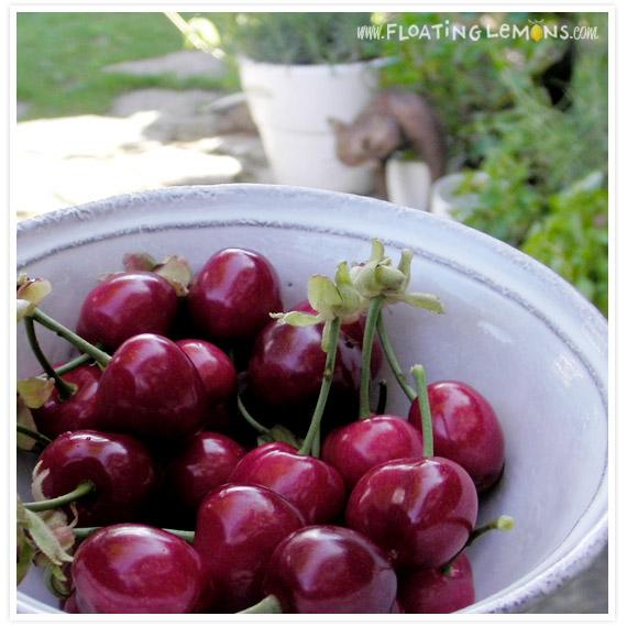 Garden-cherries-3