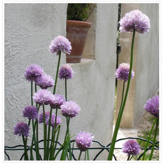 Veggie-garden-5