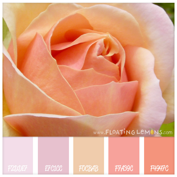 Pink-peach-rose-hues