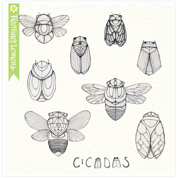 Cicadas Sketch by Mariana Musa