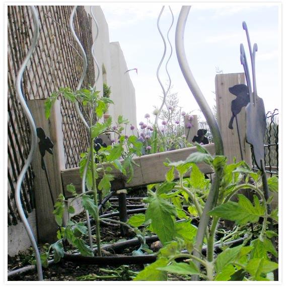 Veggie-garden-2