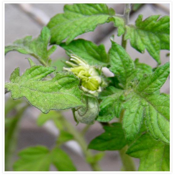 Veggie-garden-3