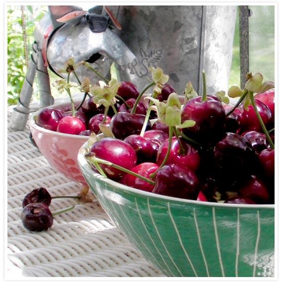 Veggie-garden-7