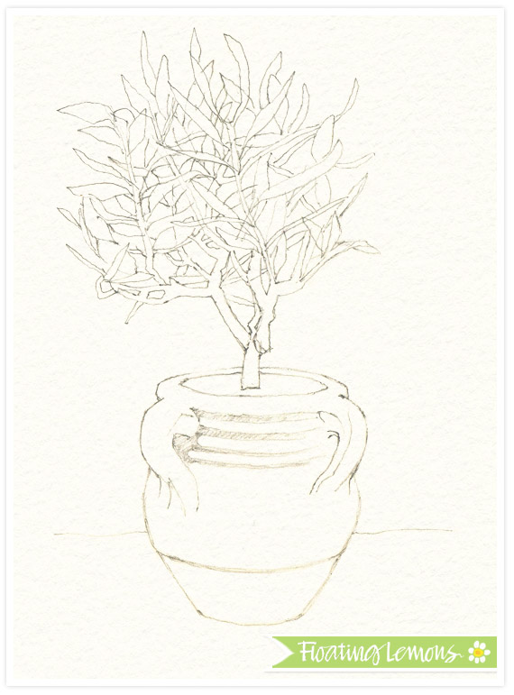 Olive tree pot sketch