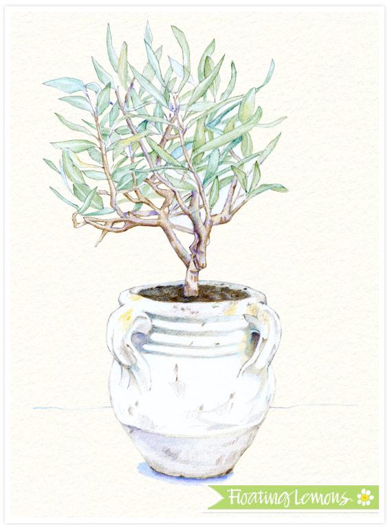 Olive-tree-pot-coloured-pencil