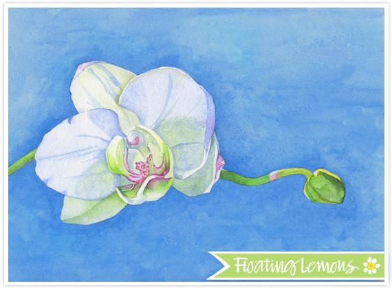 Orchid blossom watercolour