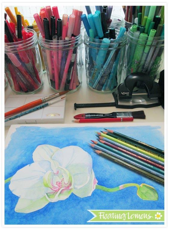 Orchid blossom progress
