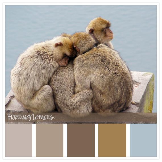 Barbary ape hues