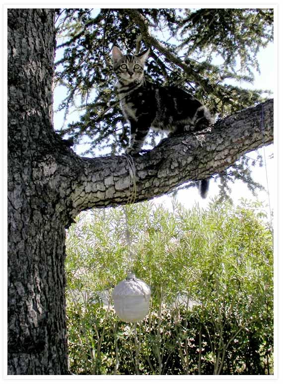 Caesar kitten up tree