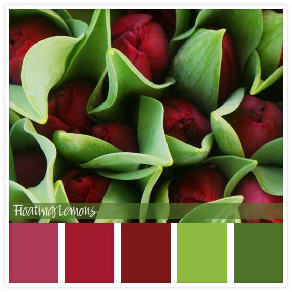 Burgundy tulip hues