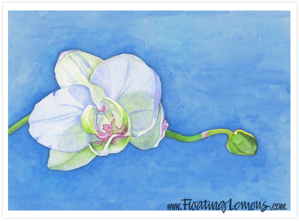 Orchid-Blossom-Decor-Art-Print-by-Floating-Lemons