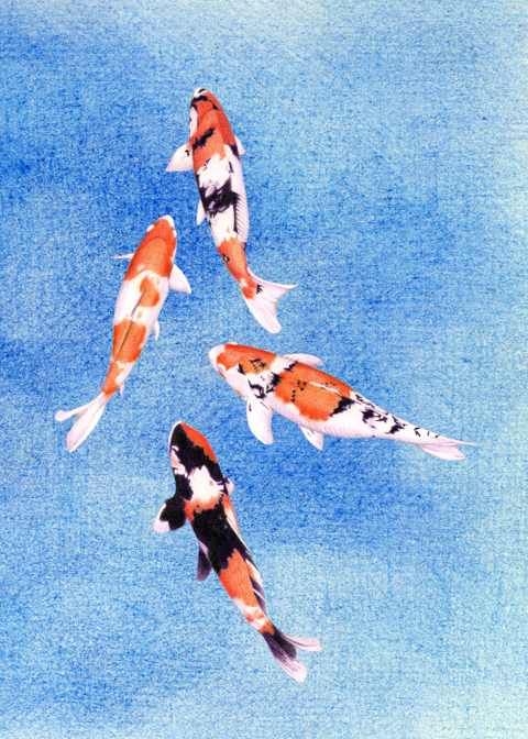 Floating_koi_blue_400