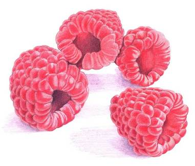 49raspberries